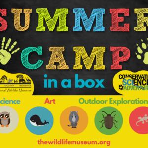Camp in a Box